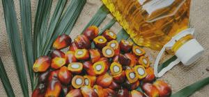 Palmolja och frukter från palmträdet